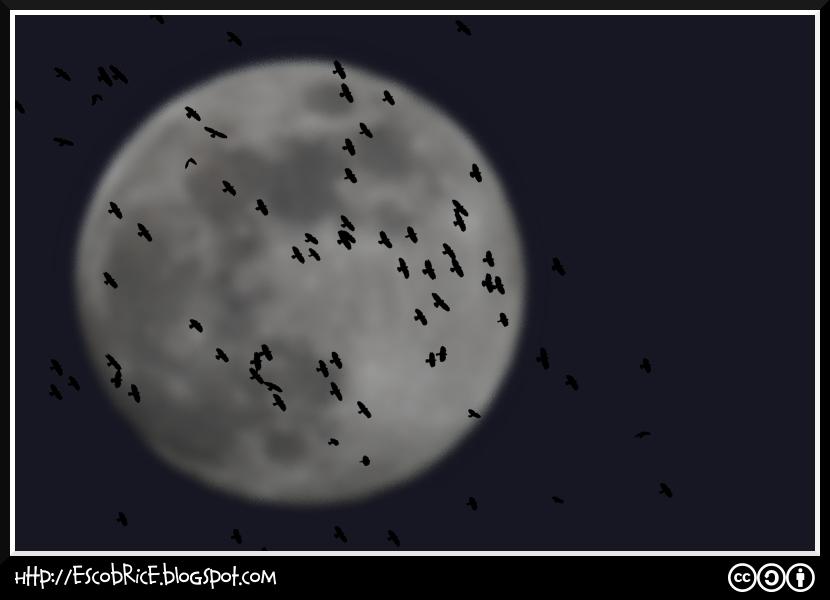 Pajaros y Luna
